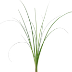Wedding greenery bear grass filler flower sold near me