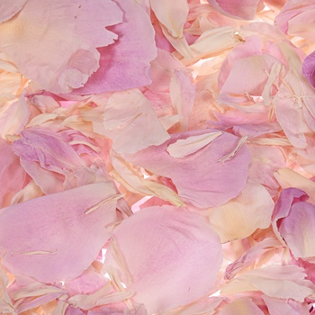Beautiful Blush Dried Peony Petals