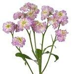 Bulk Stock Flower White