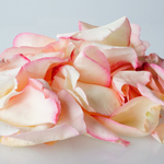 Pink Tipped Real Roses Petals