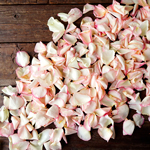 White Fresh Rose Petals