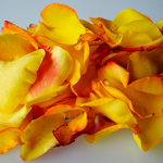 Sunset Real Roses Petals