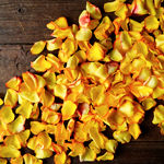 Sunset Rose Petals for sale