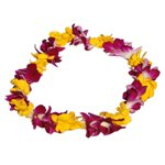 Hawaiian Lei Bi Color