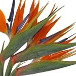 Tropical Flowers Birds of Paradise