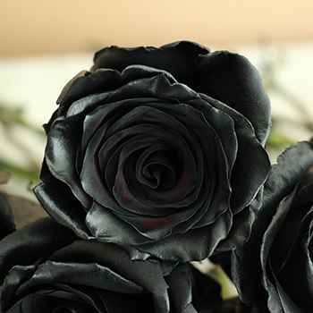 Black Roses Tinted