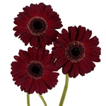 Mini Gerbera Daisies Bulk Red Flowers