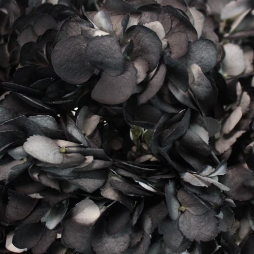 Black Airbrushed Hydrangea Flower