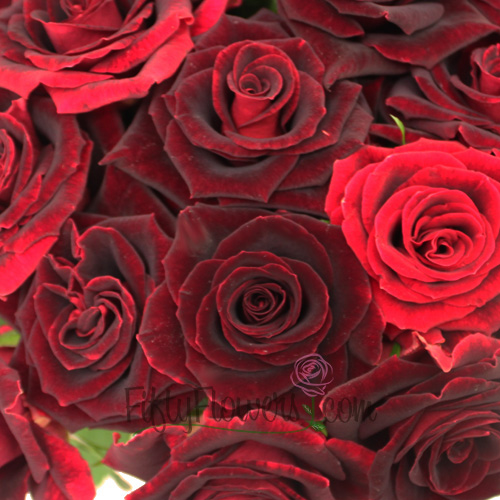 Scarlett O'Hara Red Sweetheart Rose