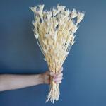 Bleached Nigella Flowers