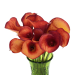 Orange Mini Calla Lilies