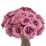Lavender Rose Blue Curiosa