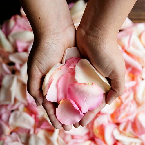 Fresh Rose Petals Blush
