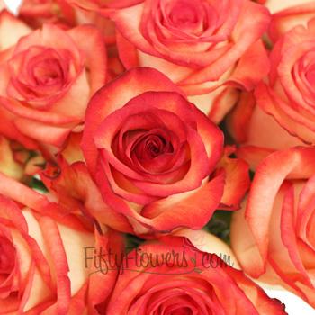 Red Blush Rose