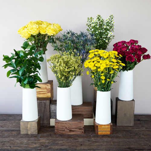 Primary Colors Flower Combo Pack