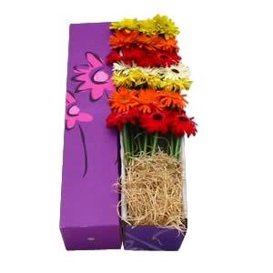 Gerbera Flower Gift Assorted and Solid Colors