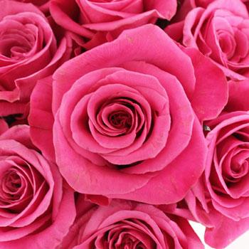 Breezer Down the Aisle Rose