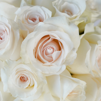 Fresh Cut Rose Blushing Bride