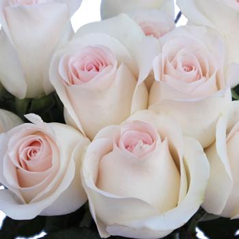 Fresh Cut Rose Blushing Bride