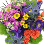 Filler Flower Combo Package 1