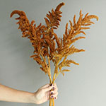 Bronze Upright Amaranthus Fresh Greens