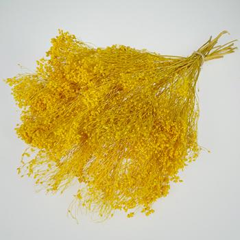 Mustard Yellow Broom Bloom