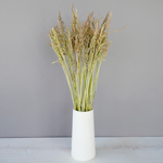 Bulk greenery broomcorn autumn grass filler flowers sold for delivery