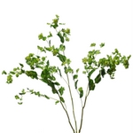 Bupleurum_Green_and_Yellow_Flower