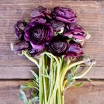 Burgundy Ranunculus Flower Bunch