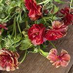 Butterfly Ranunculus Brick Red Orange Wedding Flower Idea