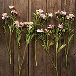 Butterfly Ranunculus Dusty Pink Wedding Flower Idea