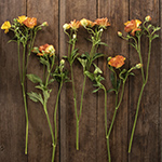 Butterfly Ranunculus Orange Wedding Flower Idea
