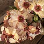 Butterfly Ranunculus Dusty Orange Wedding Flower idea