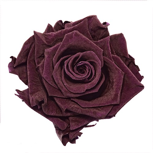 Preserved Classic Purple Rose