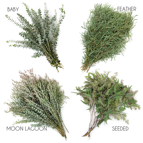 Choose Your Own Eucalyptus Greenery Premium Pack