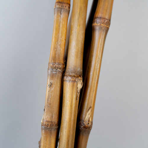 Dried Bamboo Cane