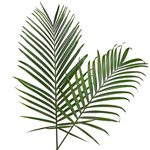 Palma Phoenix Green Filler