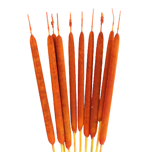 Orange Airbrushed Cattails