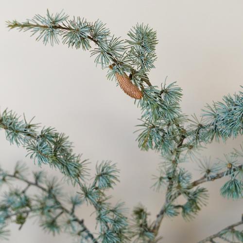 Wedding greenery blue cedar winter filler flower sold near me