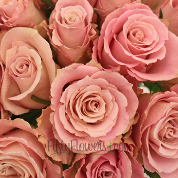 Charming Unique Light Pink Rose