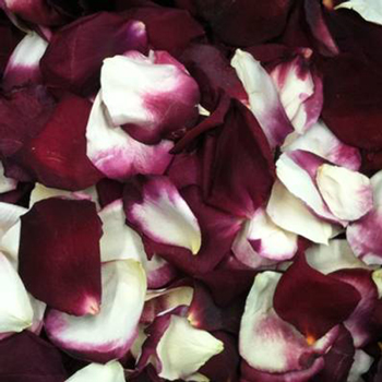 Winter Freeze Dried Rose Petals