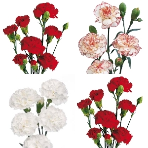Christmas Pack Mini Carnation Flowers