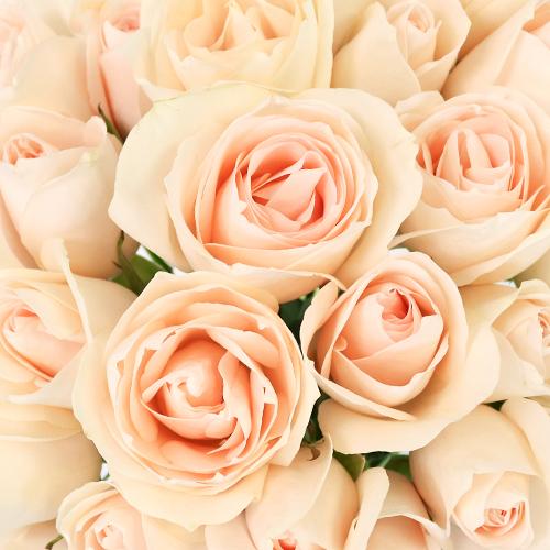 James Peach Sweetheart Rose