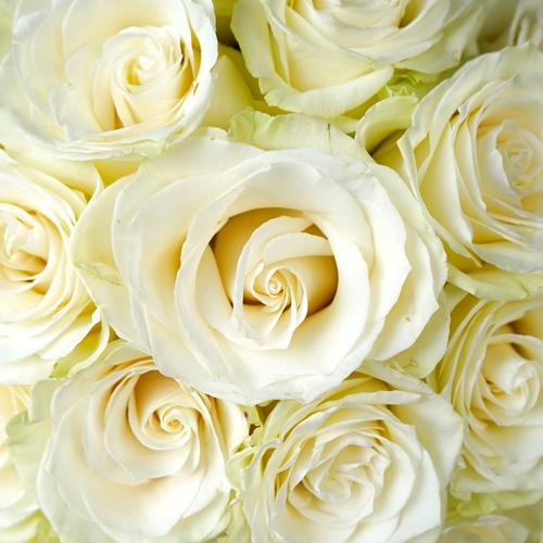 Mondial White Rose