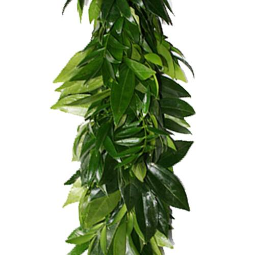 Nagi, Salal and Cocculus Greens Garland