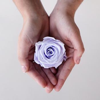 Preserved Cool Lavender Rose