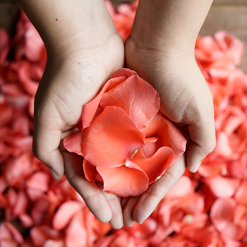 Coral Rose Petals Wholesale