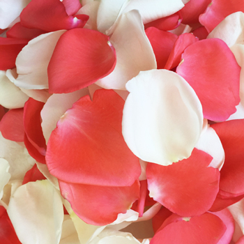Coral and White Rose Petals