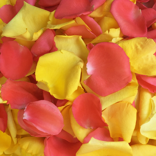 Coral and Yellow Rose Petals