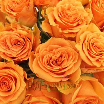 Cosima Orange Rose